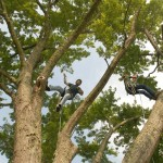 ALPINE-TREE-SERVICES-INC-BECKLEY-WV--AT-WORK-2
